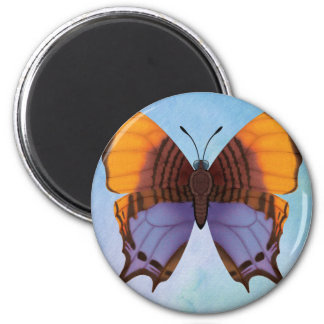 Pansy Daggerwing Butterfly Magnet