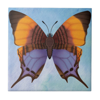 Pansy Daggerwing Butterfly Tile