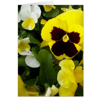 Pansy_Delights,_Birthday_Greeting_Card Card
