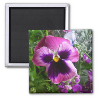 pansy face magnet