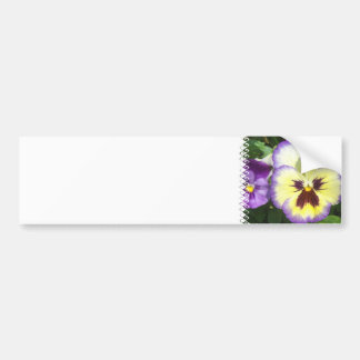 Pansy Flower Pictures Bumper Sticker