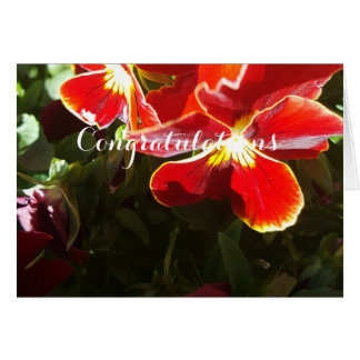 Pansy flowers card