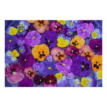 Pansy flowers floating in bird bath with dew