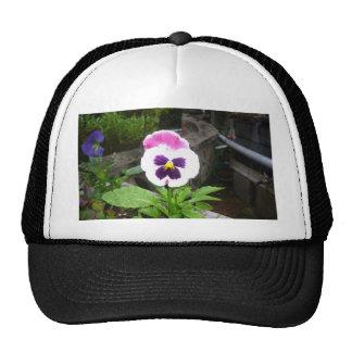 Pansy Galore Trucker Hat