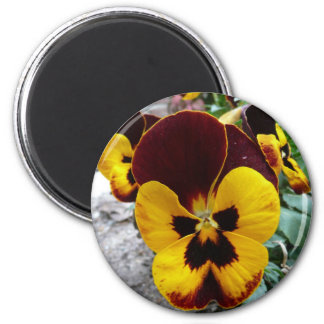 pansy magnet