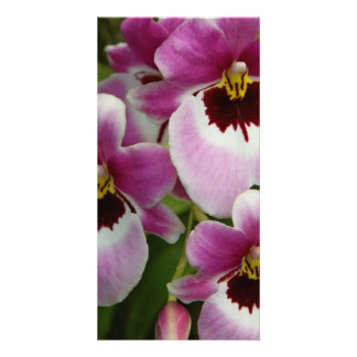 Pansy Orchid Photocard Photo Card
