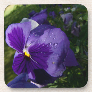 Pansy with Water Droplets Coasters