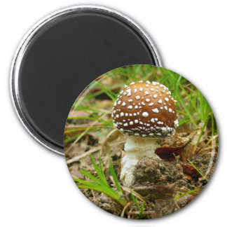 Panther Cap Mushroom Magnet