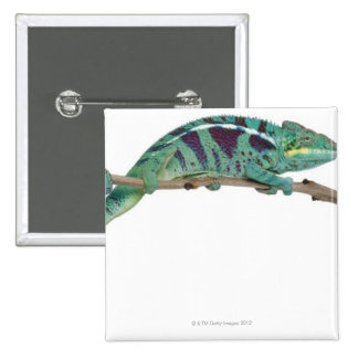 Panther Chameleon Nosy Be (Furcifer pardalis) 2 Inch Square Button