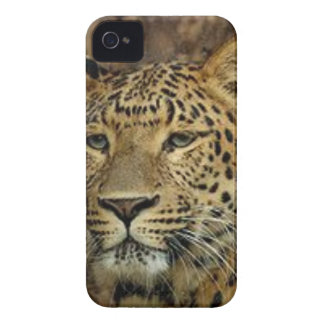 Panther Stalking Case-Mate iPhone 4 Cases