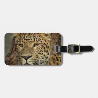 Panther Stalking Luggage Tag