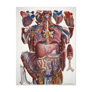 Paolo Mascagni Illustration of Human Viscera Canvas Print