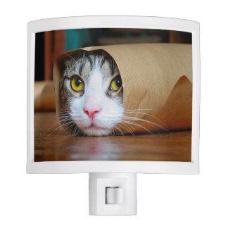 Paper cat - funny cats - cat meme - crazy cat night lites