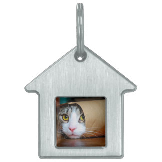 Paper cat - funny cats - cat meme - crazy cat pet name tag