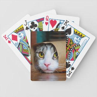 Paper cat - funny cats - cat meme - crazy cat poker deck