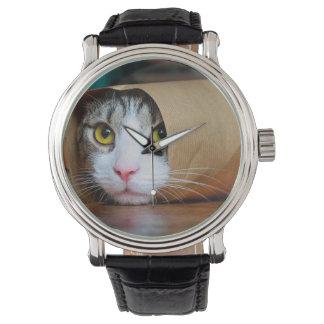 Paper cat - funny cats - cat meme - crazy cat watch