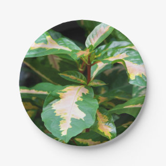 Paper Plates - Tricolored Caricature Plant 7 Inch Paper Plate