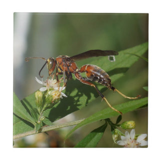 Paper Wasp on Flower Ceramic Photo Tile