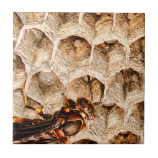Paper Wasp on Nest Ceramic Photo Tile