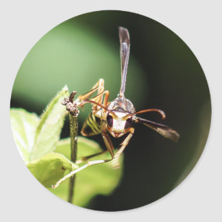 Paper Wasp Round Sticker