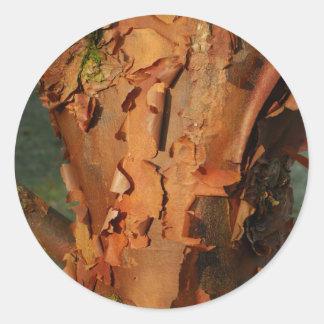 Paperbark Maple Sticker