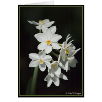 Paperwhite Narcissus Card