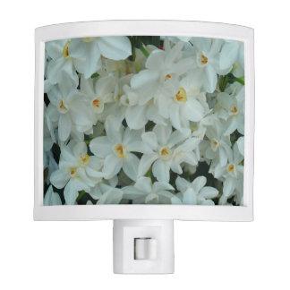 Paperwhite Narcissus Delicate White Flowers Nite Lites