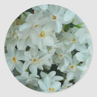 Paperwhite Narcissus Delicate White Flowers Round Sticker
