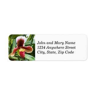 Paphiopedilum Orchid Floral Return Address Labels