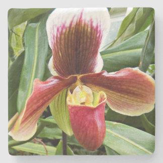 Paphiopedilum Orchid Floral Stone Coaster