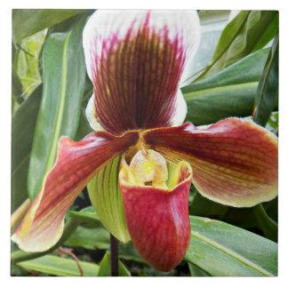 Paphiopedilum Orchid Floral Tile