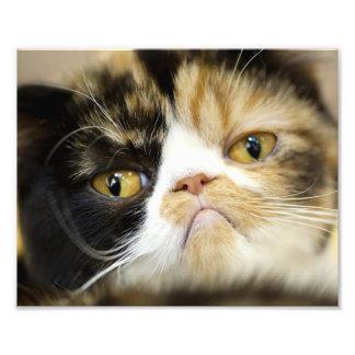 Papier professionnel de photo de Kodak de chat