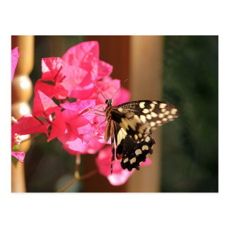 Papilio Butterfly in Ethiopia Postcard