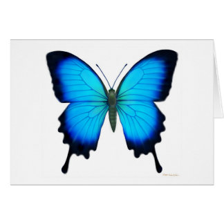 Papilio Ulysses Butterfly Card