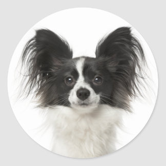 Papillon Black And White Puppy Dog - Love Puppies Classic Round Sticker