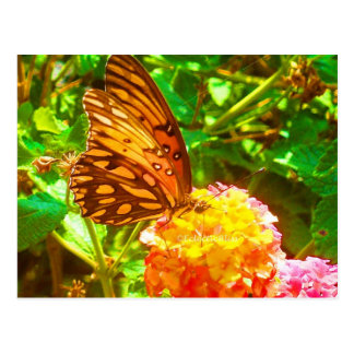 Papillon (Butterfly) Postcard