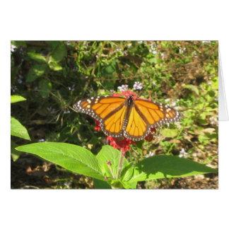 Papillon d'Austin Carte De Vœux
