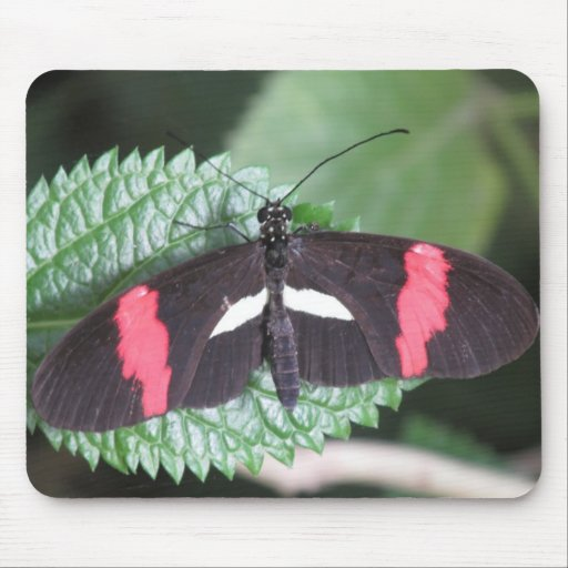 Papillon de facteur tapis de souris