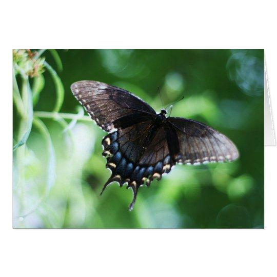 """papillon de jardin"" by Larry Coressel Card"