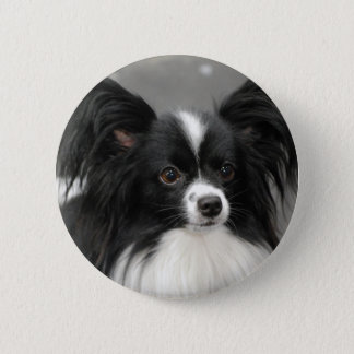 Papillon Dog  Button