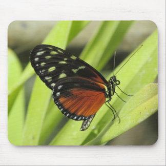 Papillon orange et noir sur la feuille Mousepad Tapis De Souris