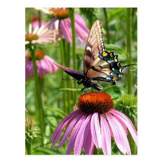 papillon sur la fleur postcard