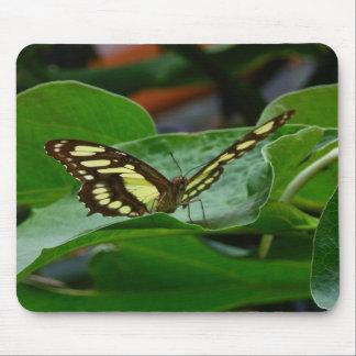 Papillon Tapis De Souris