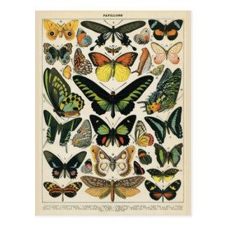 Papillons - Postal Postcard