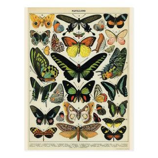 Papillons Postcard