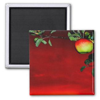 Paradise apple magnet