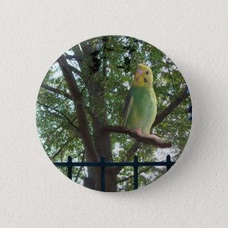 Parakeet 2 Inch Round Button