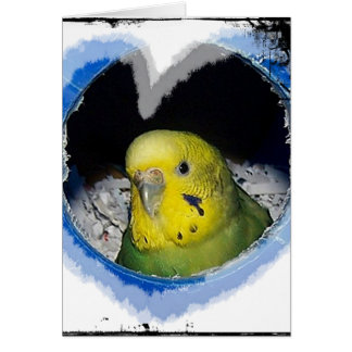 Parakeet Bird Heart Greeting Card