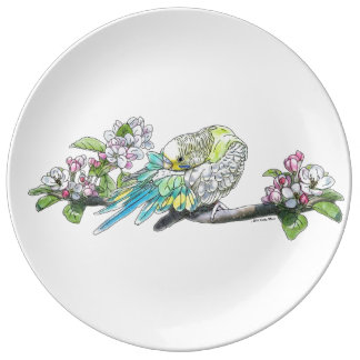 Parakeet Grooming Its Feathers Porcelain Plates