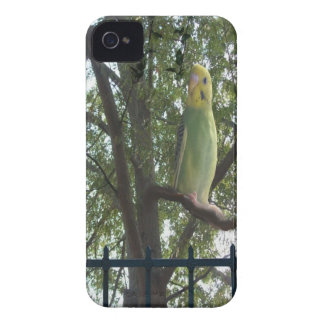 Parakeet iPhone 4 Case-Mate Cases